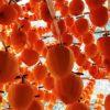 コロコロとかわいい「ころ柿(干し柿)」作り体験 @丸森町